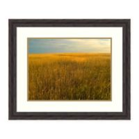 Amanti Art® Tim Fitzharris Nature Photography 29.38-Inch x 24.38-Inch Acrylic Framed Print in Br