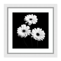 Amanti Art® Jeff Maihara Floral Photography 29-Inch Square Acrylic Framed Print in Black