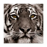 """Empire Art Direct """"Eye Of The Tiger"""" Glass Wall Art in Black/White"""