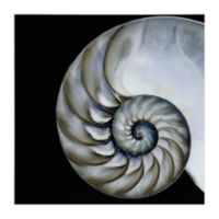 "Empire Art Direct ""Pearly Nautilus"" Glass Wall Art in White/Black"