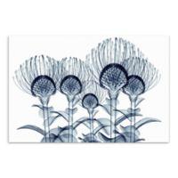 Nodding Pincushions 48-Inch x 32-Inch Glass Wall Art
