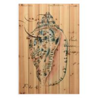Seashell Ephmera Canvas Wall Art