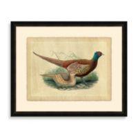 Pheasant 1 Framed Art