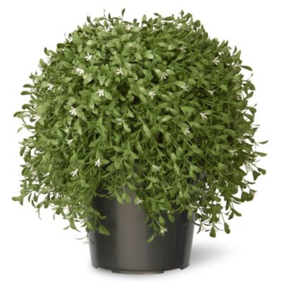 National Tree 18 Inch Argentia Plant With Green Pot