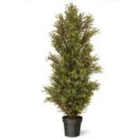 National Tree 60-Inch Argentia Plant with Green Pot