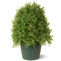 National Tree 15-Inch Boxwood Tree with Green Pot
