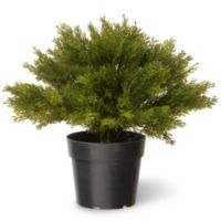 National Tree 15-Inch Globe Juniper with Green Pot