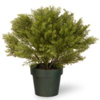 National Tree 20-Inch Globe Juniper with Green Pot