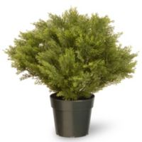 National Tree 24-Inch Globe Juniper with Green Pot