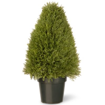 Buy Indoor Decorative Trees from Bed Bath & Beyond