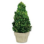 Sage Floral 11-Inch Preserved Boxwood Cone Topiary