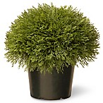 National Tree 15-Inch Juniper Bush with Green Pot