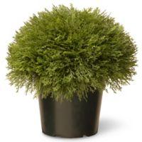 National Tree 15-Inch Juniper Bush with Green Pot