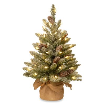 national tree 2 foot snowy concolor fir tree pre lit with 50 lights - Christmas Tree Pre Lit