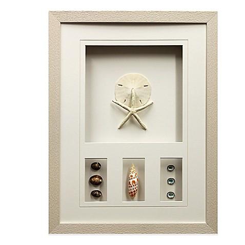 Star Creations Sea Urchin Shadow Box 16-Inch x 21-Inch Frame - Bed ...