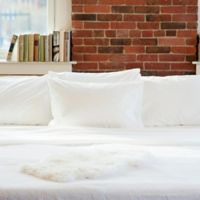 Beantown Bedding Laundry-Free Linens Luxury Disposable Standard Pillowcase in White (Set of 2)