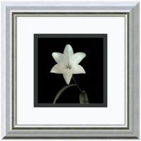 Walter Gritsik Flower Series VI Framed Print Wall Art