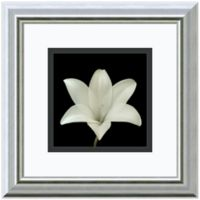 Walter Gritsik Flower Series VII Framed Print Wall Art