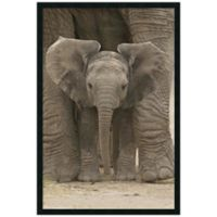 """Big Ears"" Baby Elephant Framed Art Print"