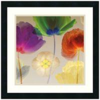 Robert Mertens Poppy Panorama I Framed Art