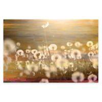 Parvez Taj Field 18-Inch x 12-Inch Canvas Wall Art