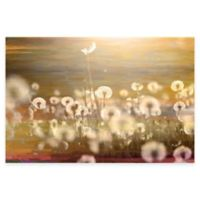 Parvez Taj Field 24-Inch x 16-Inch Canvas Wall Art