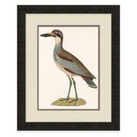 Framed Seabird Wall 2 Art