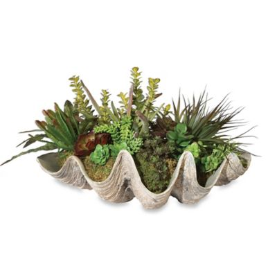 uttermost sea coast succulents planter