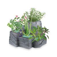 Wizard Mountain Garden Kit