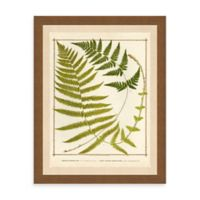 Ferns Print II Framed Wall Art