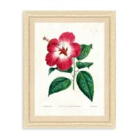 Botanical Bundle Framed Giclée Print Wall Art IV