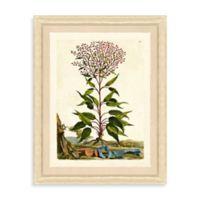 Framed Vintage Botanical Giclee Print I Wall Art