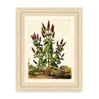 Framed Vintage Botanical Giclee Print II Wall Art