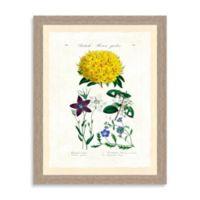 Botanical Study Framed Giclée Print Wall Art I