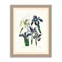 Botanical Study Framed Giclée Print Wall Art V