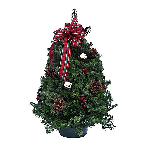 Highland 18-Inch Tabletop Fresh Christmas Tree - Bed Bath ...