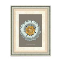 Framed Giclee Baby Blue Rosette Print Wall Art I