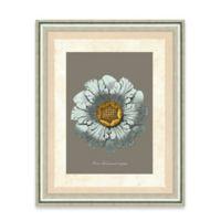 Framed Giclee Baby Blue Rosette Print Wall Art II