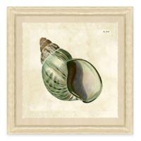 Sea Shell Print II Giclée Framed Wall Art