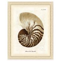 Sepia Shell Print II Giclée Framed Wall Art