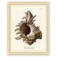 Sepia Shell Print III Giclée Framed Wall Art