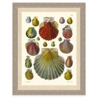 Colored Shell Print II Giclée Framed Wall Art