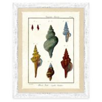 Sea Life Print II Giclée Framed Wall Art