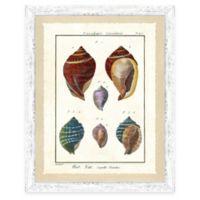 Framed Giclee Colorful Shell Print Wall Art I