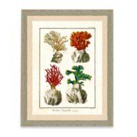 Framed Giclée Sea Coral Print II Wall Art
