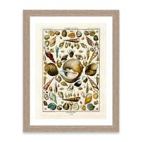 Framed Giclée Shell Collage Print I Wall Art