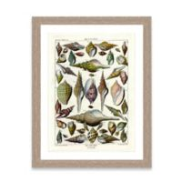 Framed Giclée Shell Collage Print II Wall Art