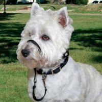 Walk n Train® Small Head Halter for Dogs in Black