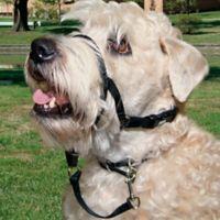Walk n Train® Medium Head Halter for Dogs in Black