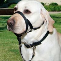 Walk n Train® Large Head Halter for Dogs in Black